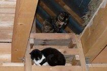 Ferienwohnung Altkalen Mecklenburger Seenplatte Katzen