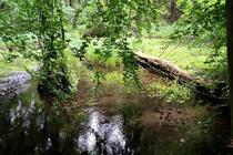Ferienwohnung Mölln Krakower See Umgebung Nebeltal