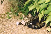 Ferienwohnung Minzow Mecklenburgische Seenplatte Katze