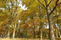 Ferienwohnung Krakow am See Krakower See Umgebung Wald