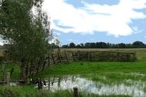 Ferienwohnung Wredenhagen Mecklenburgische Seenplatte Wiese