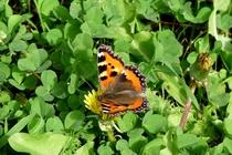 Ferienwohnung Wredenhagen Mecklenburgische Seenplatte Schmetterling