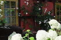 Ferienwohnung Fleesensee Silz Haus mit Blumen