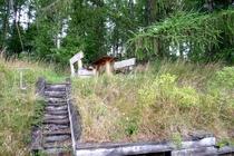 Ferienhaus Krakower See Serrahn Terrasse mit Treppe