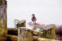Ferienhaus Mecklenburgische Seenplatte Jabel Ente