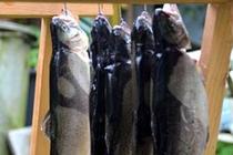 Ferienhaus Mecklenburgische Seenplatte Jabel Fische
