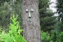 Ferienhaus Malchow Fleesensee Baum mit Gesicht