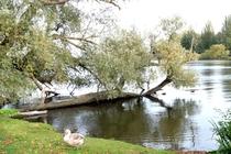 Ferienhaus Schweriner Seenlandschaft