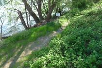 Wanderweg am See