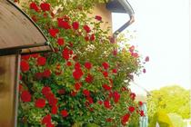 Ferienwohnung Malchow Malchower See Wassergrundstück Garten Rosen