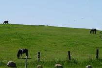 Ferienwohnung Malchow Fleesensee Pferdekoppel