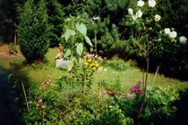 Ferienhaus Müritz Waren Garten